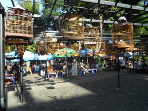 Flocking at the Bird Cafe